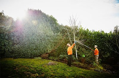 How to Do Your Tree Trimming Professionally
